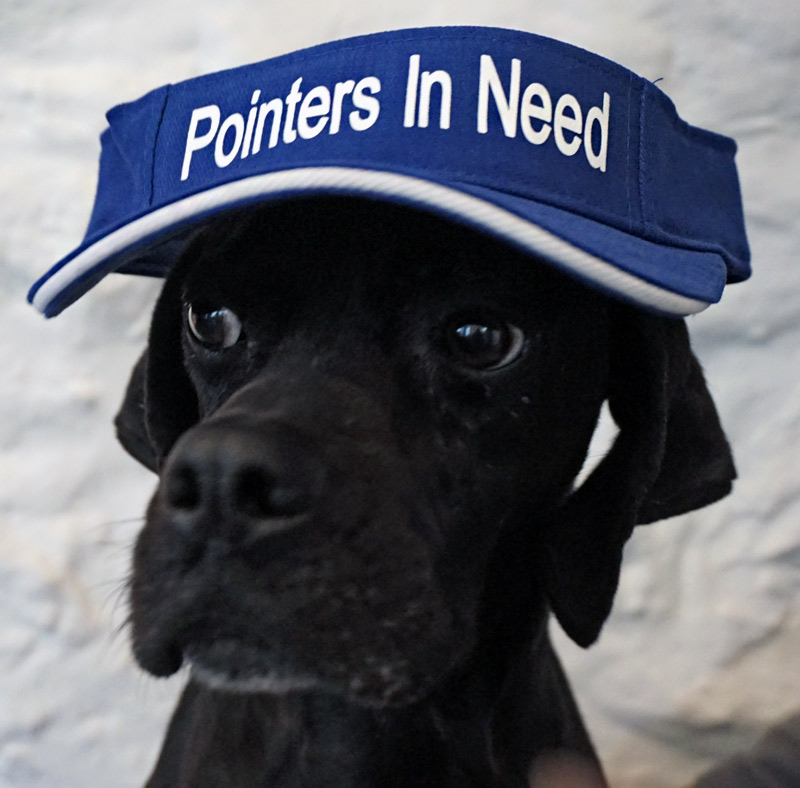 Pointers In Need Sun Visor